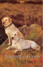 dog200452 - Yellow Labradors Salmon Watercolour Postcard Post Card