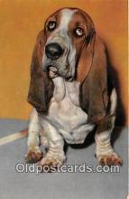 dog200453 - Basset Hound  Postcard Post Card