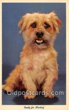 dog200468 - Postcard Post Card