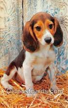 dog200469 - Beagle Hound  Postcard Post Card