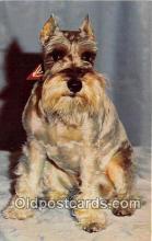 dog200473 - Schnauzer  Postcard Post Card