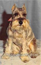 dog200474 - Schnauzer  Postcard Post Card