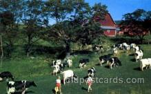 dry001015 - Cobleskill, New York, USA Dairy, Cow Cows, Postcard Post Card