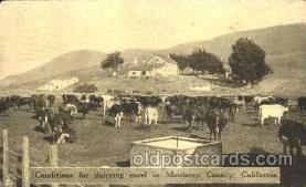 dry001016 - Monteray County, California, USADairy, Cow Cows, Postcard Post Card