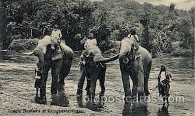 Katugastota River, Ceylon