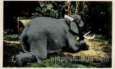 ele001077 - Tonkin Vietnam?  Elephant, Elephants, Postcard Post Card
