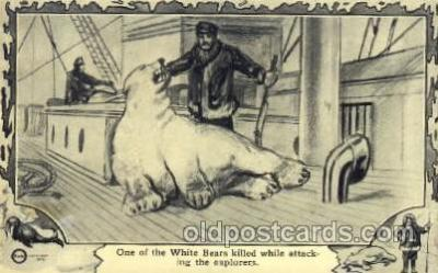 White bear was killed