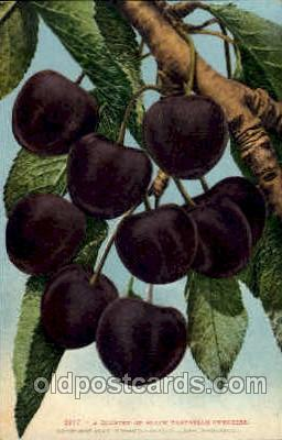 Black Tartarian Cherries
