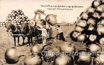 exa002270 - Harvesting Onions 1909 WH Martin Postcards Post Cards Old Vintage Antique