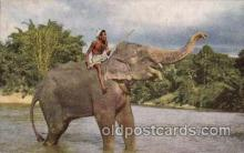 ele001001 - Kandy Ceylon Elephant, Elephants, Postcard Post Card