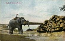 ele001005 - Elephant, Elephants, Postcard Post Card