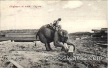 ele001014 - Ceylon Elephant, Elephants, Postcard Post Card