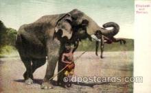 ele001019 - Elephant and Trainer, Elephants, Postcard Post Card