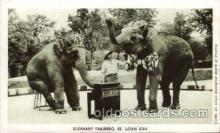 ele001020 - Zoo St. Louis, Mo USA Elephant, Elephants, Postcard Post Card