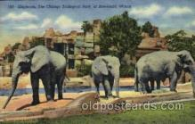 ele001021 - Elephant, Chicago Zoological Park at Brookfield, Illinois, USA Elephants, Postcard Post Card