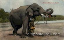ele001022 - Temple Elephant, Ceylon,  Elephants, Postcard Post Card