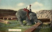 ele001024 - Ragoon India, Elephants Elephant, Postcard Post Card