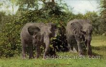 ele001028 - New York, Zoological Park, USA Elephant, Elephants, Postcard Post Card