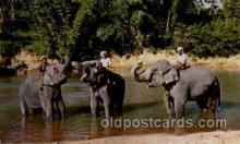 ele001030 - Kandy Ceylon Elephant, Elephants, Postcard Post Card