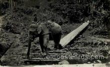 ele001031 - Ceylon Elephant, Elephants, Postcard Post Card