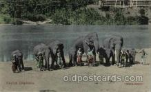 ele001032 - Ceylon Elephant, Elephants, Postcard Post Card