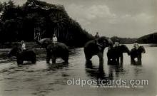 ele001033 - Ceylon Elephant, Elephants, Postcard Post Card
