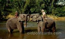 ele001040 - Mahaweli Ganda near, Kandy Ceylon Elephant, Elephants, Postcard Post Card