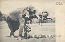ele001044 - Ceylon Elephant, Elephants, Postcard Post Card