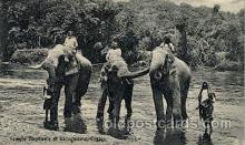 ele001047 - Katugastota River, Ceylon, Temple Elephant, Elephants, Postcard Post Card
