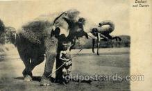 ele001050 - Ceylon Elephant, Elephants, Postcard Post Card