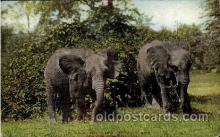 ele001054 - New York, Zoological Park, USA Elephant, Elephants, Postcard Post Card