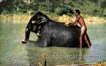 ele001056 - Ceylon Elephant, Elephants, Postcard Post Card