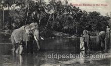 ele001069 - Ceylon Elephant, Elephants, Postcard Post Card
