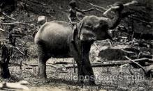 ele001072 - Ceylon Elephant, Elephants, Postcard Post Card