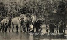 ele001073 - Kandy Temple Elephant, Elephants, Postcard Post Card