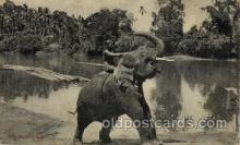 ele001075 - Ceylon Elephant, Elephants, Postcard Post Card