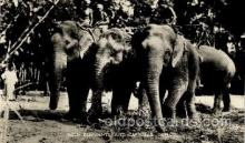 ele001076 - Ceylon Elephant, Elephants, Postcard Post Card