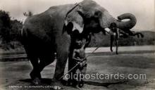 ele001078 - Temple Elephant, Ceylon,  Elephants, Postcard Post Card