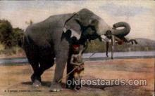 ele001080 - Ceylon Elephant, Elephants, Postcard Post Card