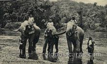 ele001083 - Temple Elephant, Ceylon,  Elephants, Postcard Post Card