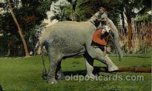 ele001084 - Ceylon Elephant, Elephants, Postcard Post Card