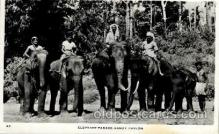 ele001085 - Ceylon Elephant, Elephants, Postcard Post Card