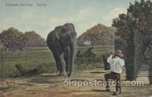 ele001087 - Elephant Shooting, Ceylon, Elephants, Postcard Post Card