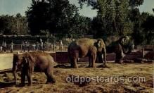 ele001092 - Denver,  Colorado USA Zoo, Elephant, Elephants, Postcard Post Card