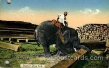 ele001093 - Rangoon India, Elephant, Elephants Post Card