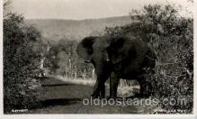 ele001096 - Elephant, Elephants, Postcard Post Card