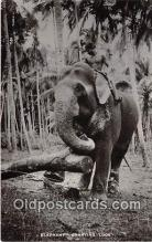 ele001120 - Elephant Carrying Logs  Postcards Post Cards Old Vintage Antique