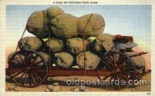 exa000049 - Potatoes from Maine Exaggeration Postcard Post Card