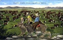 exa000103 - Rounding Up Cattle on Jack Rabbits in the West, Postcard Post Card