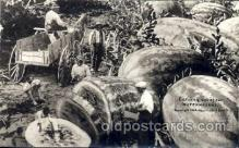 exa000123 - Carving Watermelons, Postcard Post Card